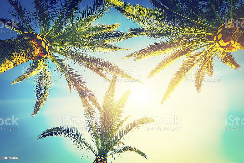three palms stock photo