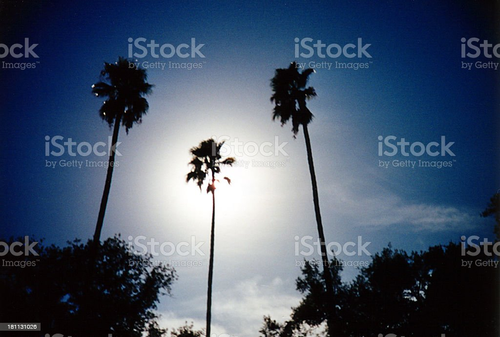 Three Palms Silhouette royalty-free stock photo