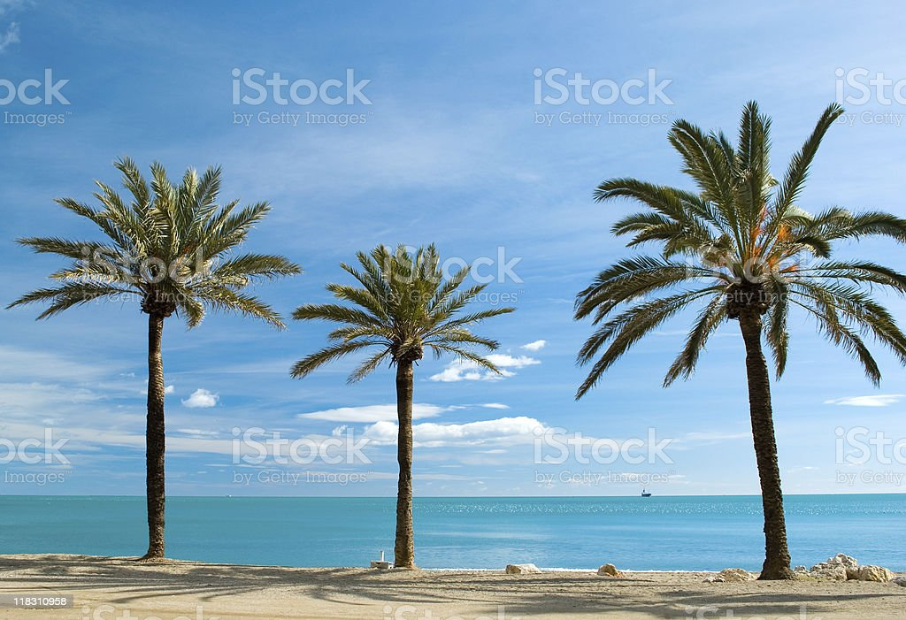 Three palm-trees stock photo