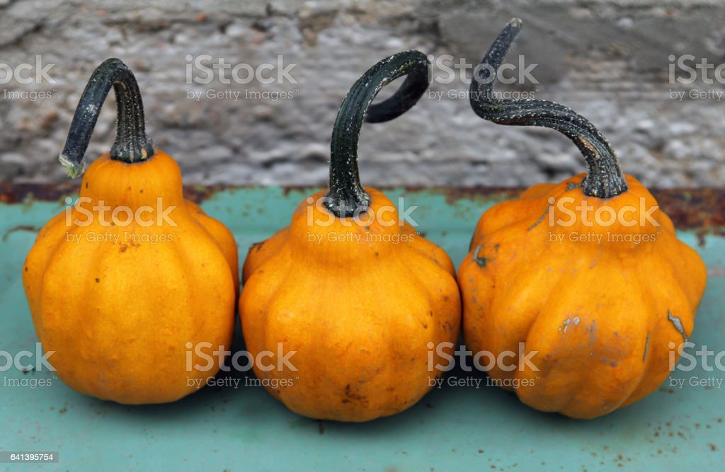 Three pear-shaped pumpkins stock photo