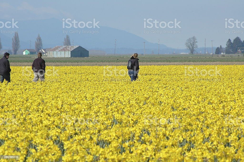 Three People in Daffodil Field stock photo
