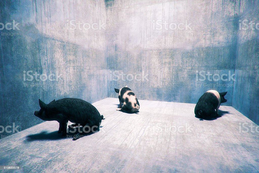 Three pigs sitting in corners stock photo