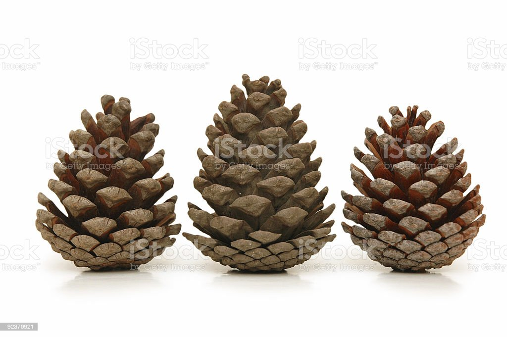 Three pine cones isolated on white background royalty-free stock photo