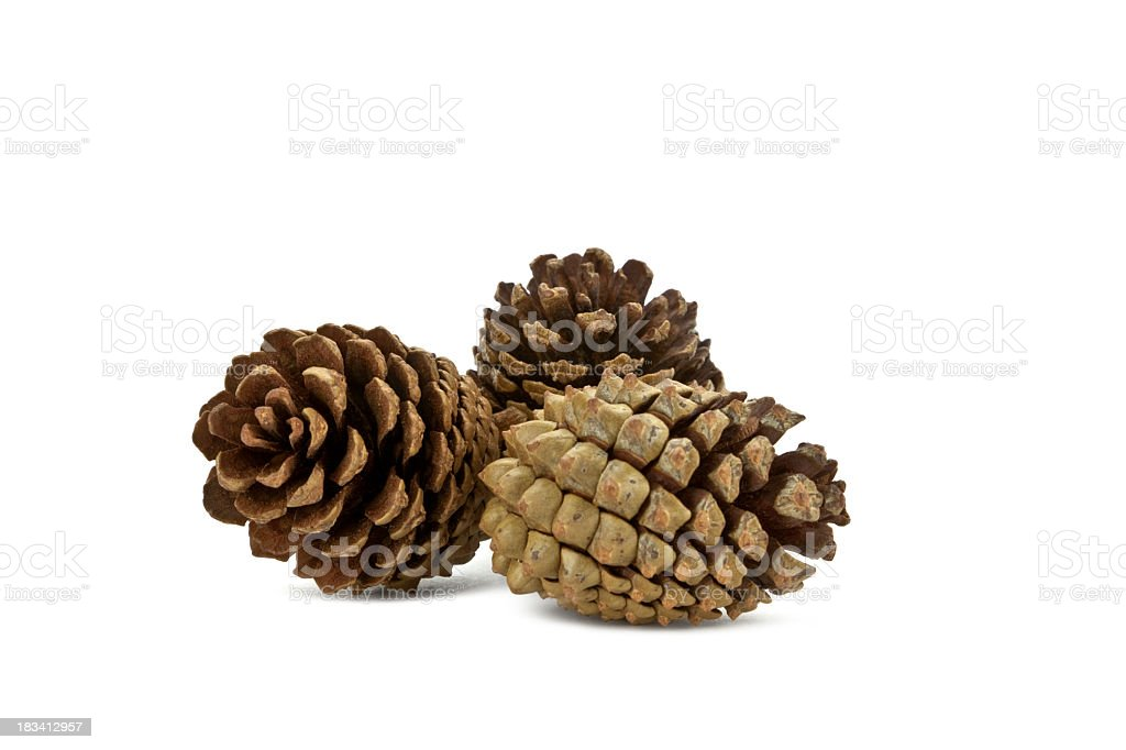 Three pine cones isolated on white stock photo