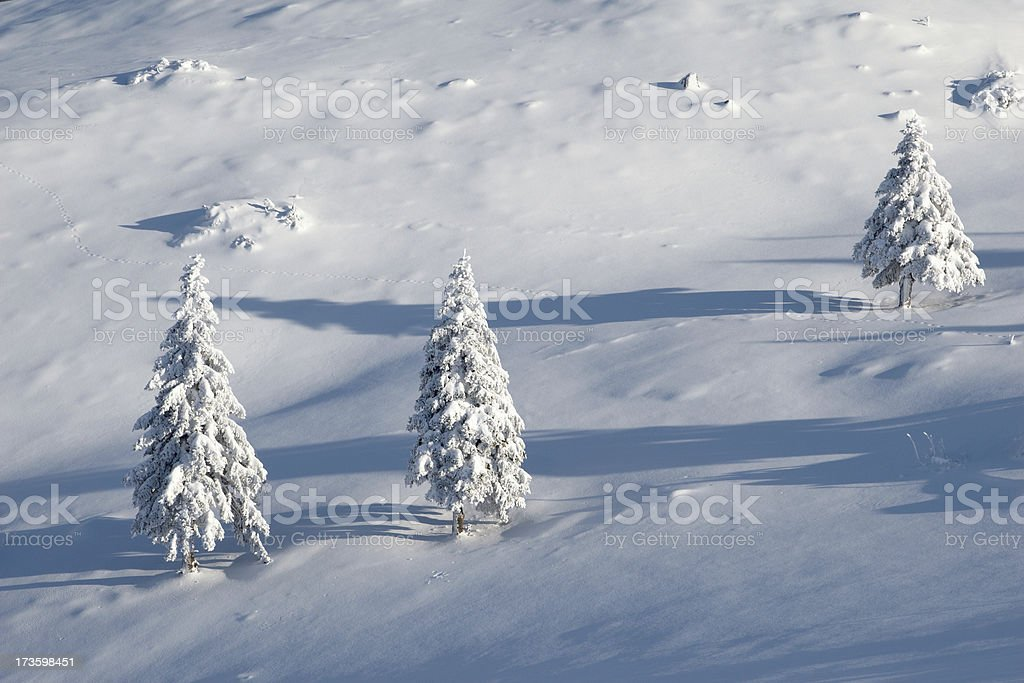 Three pines in winter royalty-free stock photo