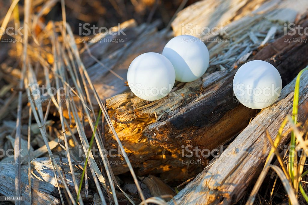 Three ping pong ball in the forest royalty-free stock photo