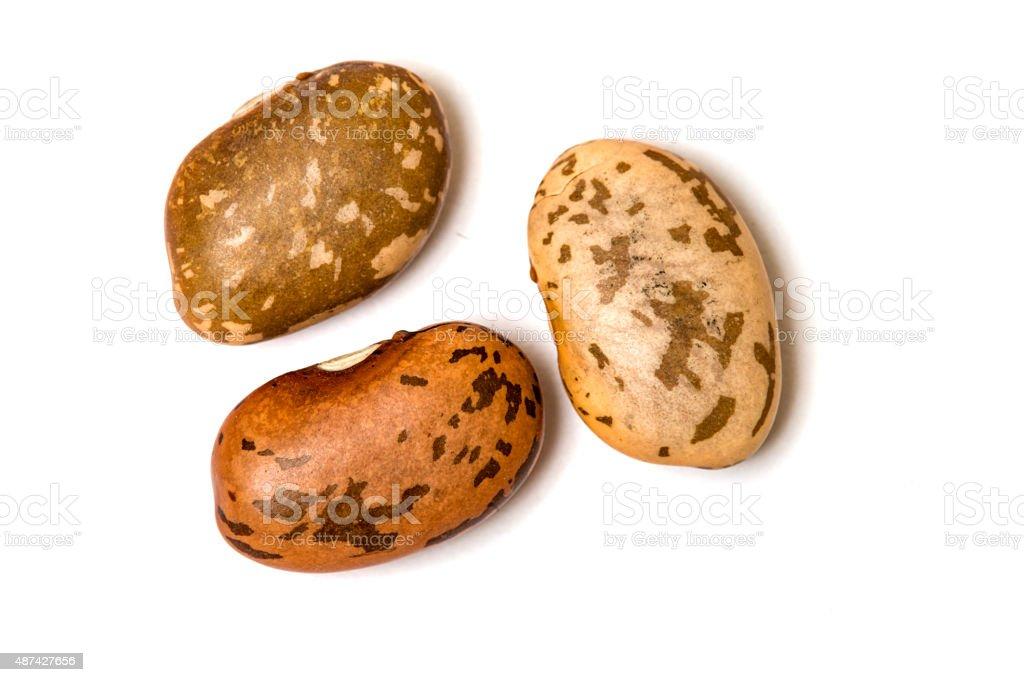 Three Pinto Beans Isolated on White stock photo