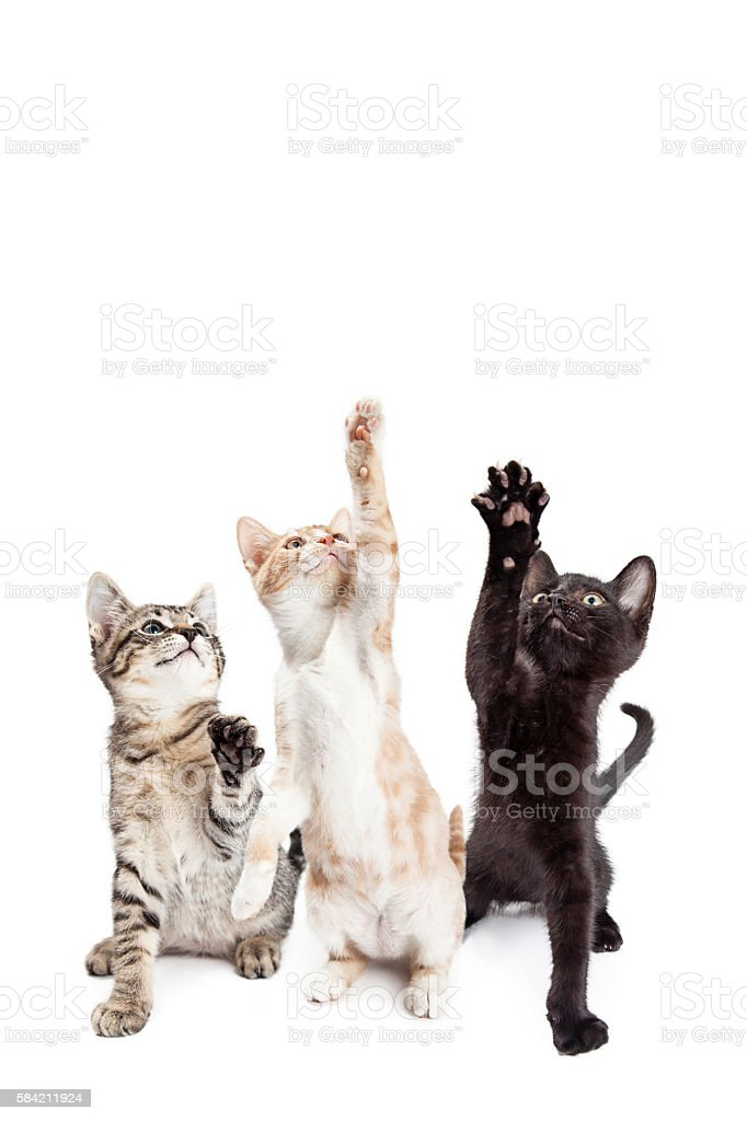 Three Playful Kittens Vertical Banner stock photo