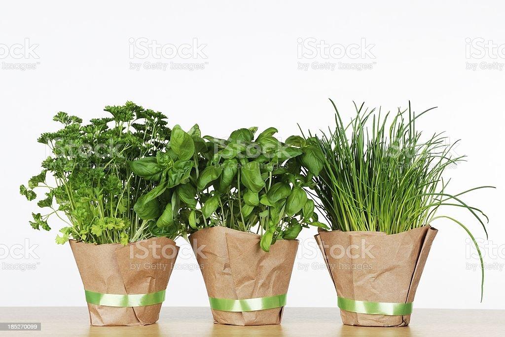 Three pots of herbs royalty-free stock photo