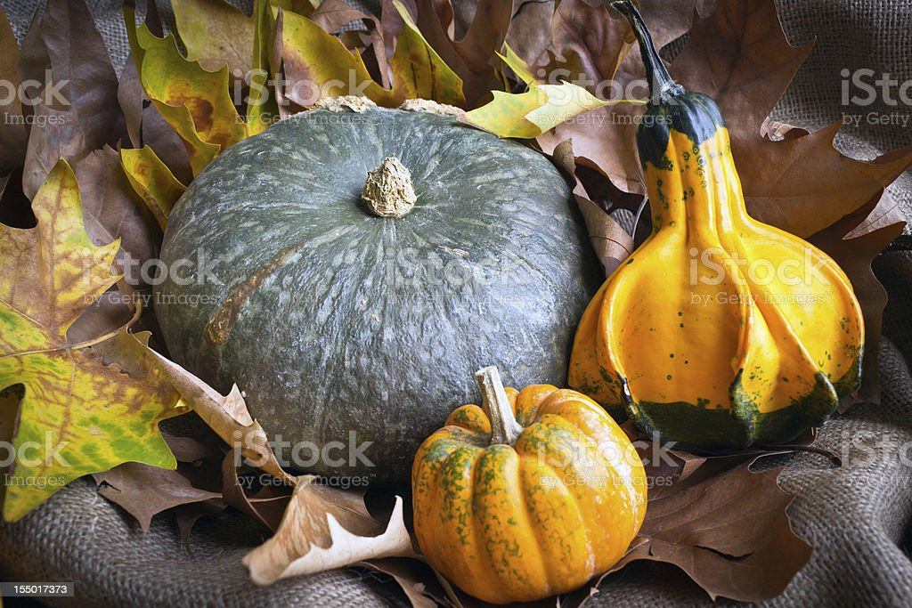 Three pumpkins among leaves royalty-free stock photo