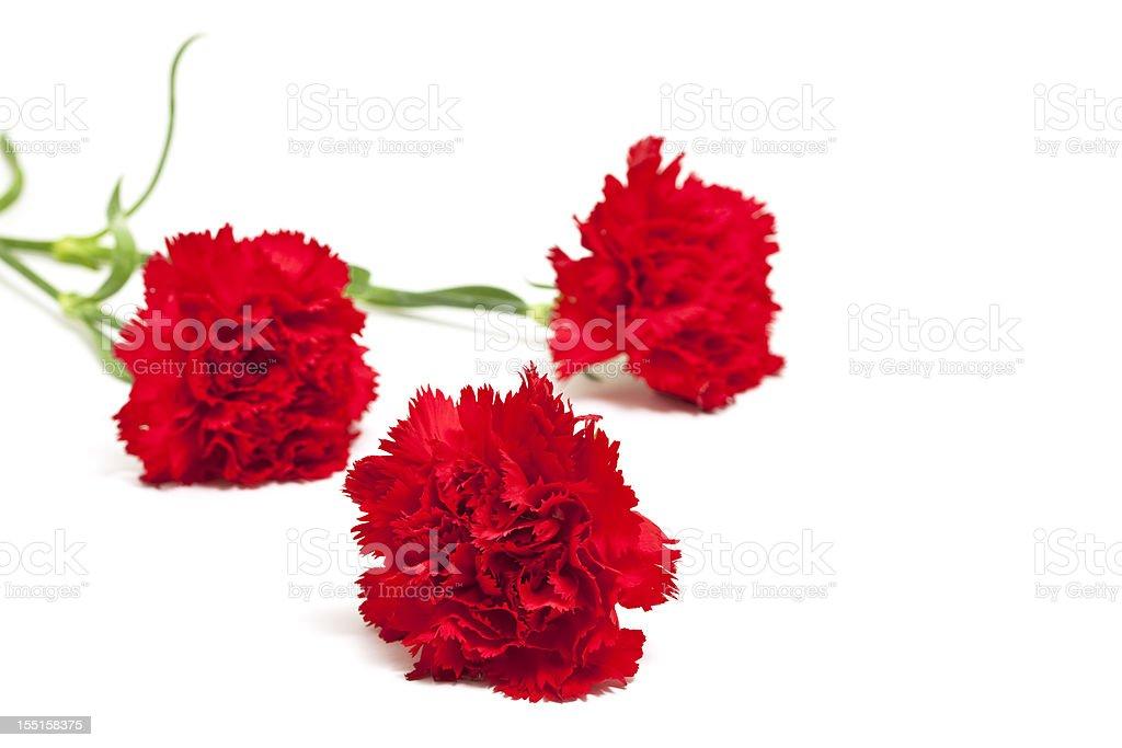 three red carnations stock photo