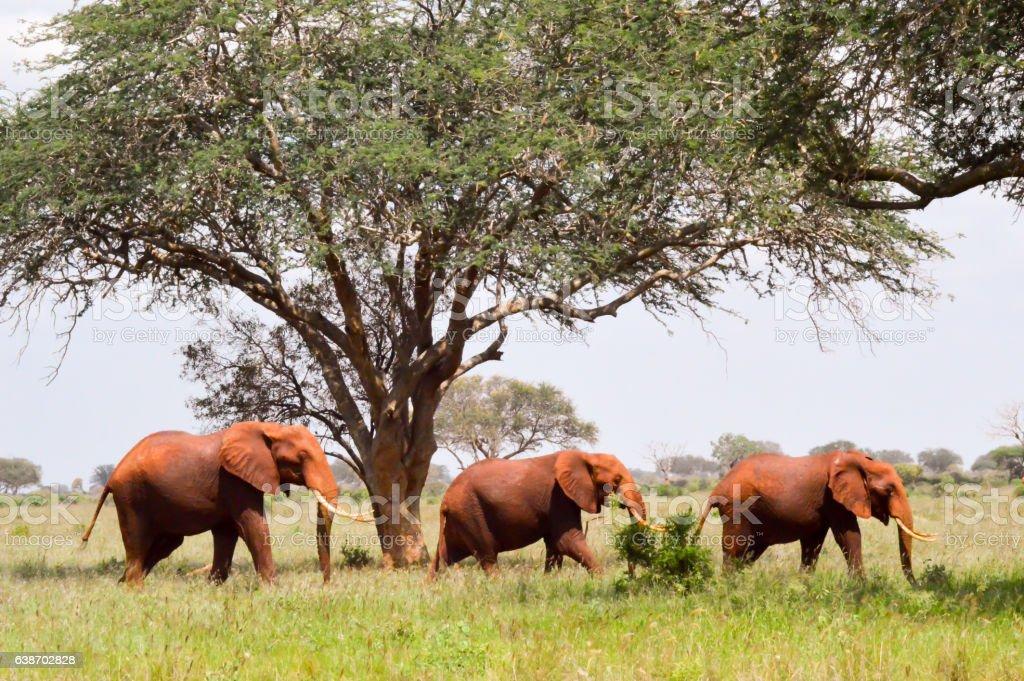 Three Red Elephants stock photo