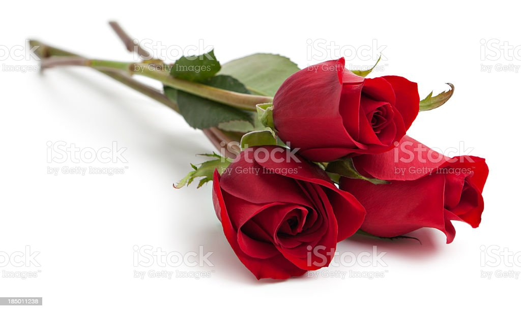 Three red rose stems royalty-free stock photo