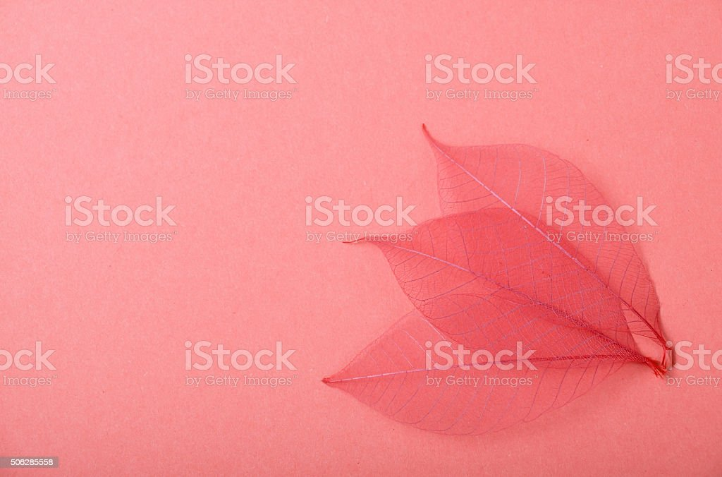 Three red skeleton leaves on pink paper royalty-free stock photo