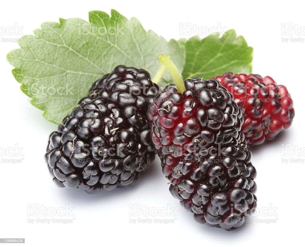Three ripe mulberries with leaves on white background stock photo