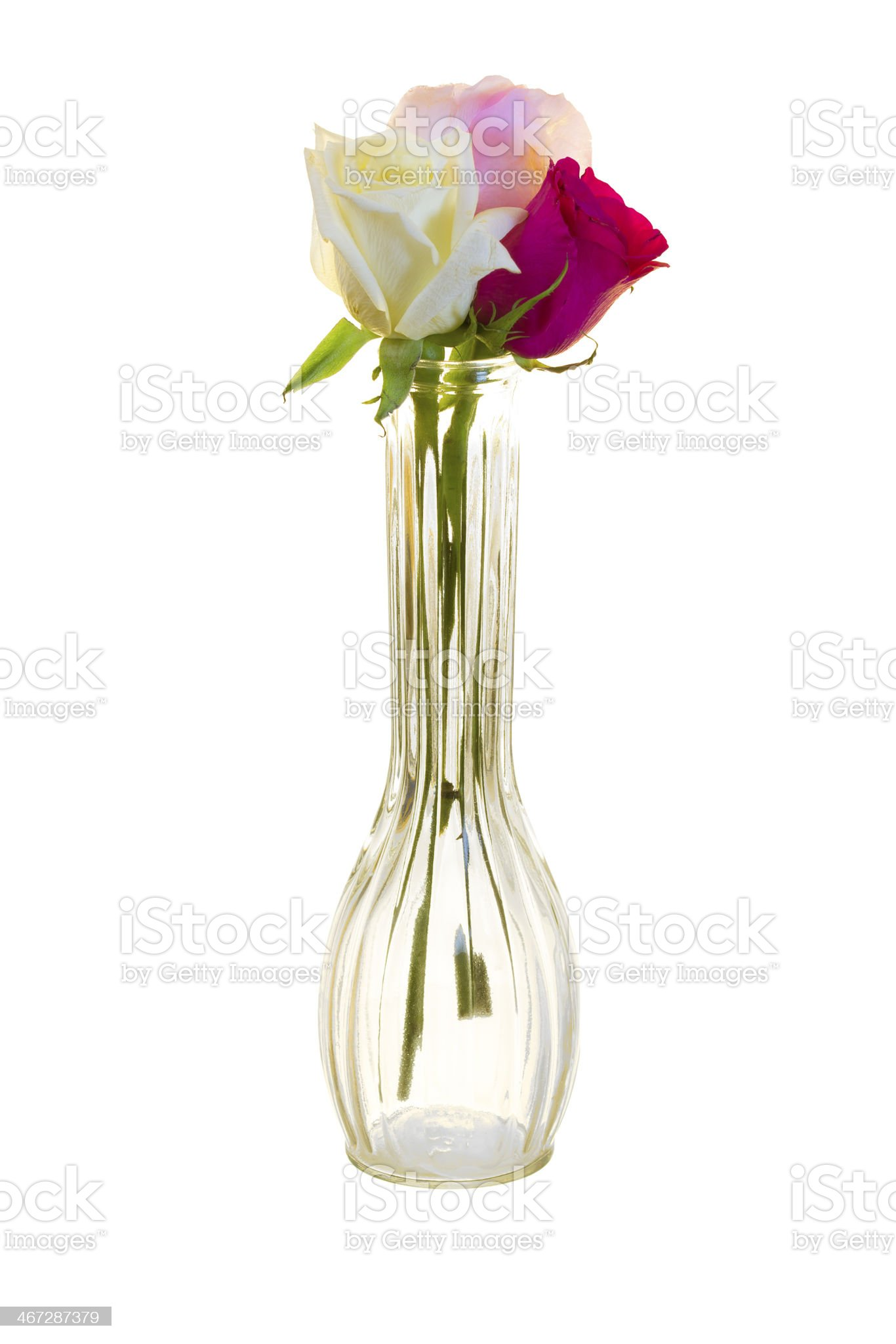 Three Roses in a Vase royalty-free stock photo