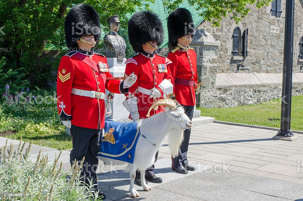 Three Royal Guards in a row with goat mascot stock photo