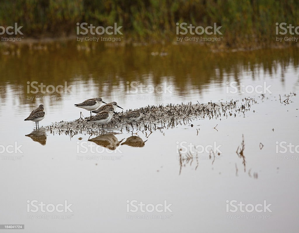 Three Sea Birds stock photo