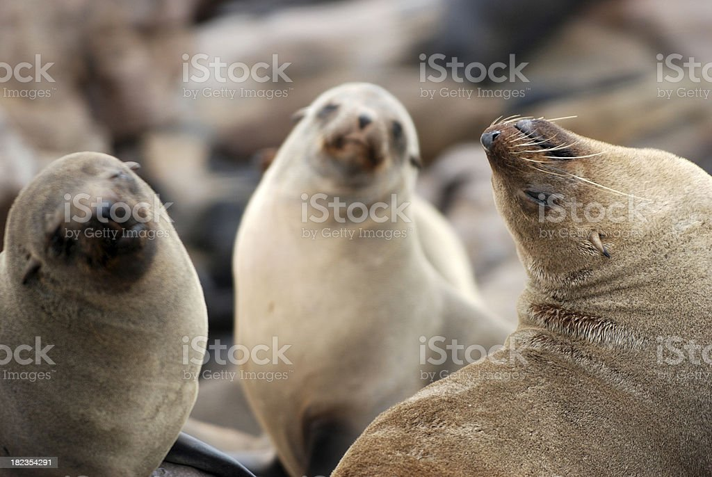 Three Seals stock photo