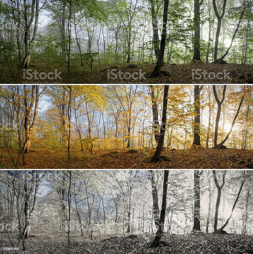 three seasons in the forest panorama stock photo