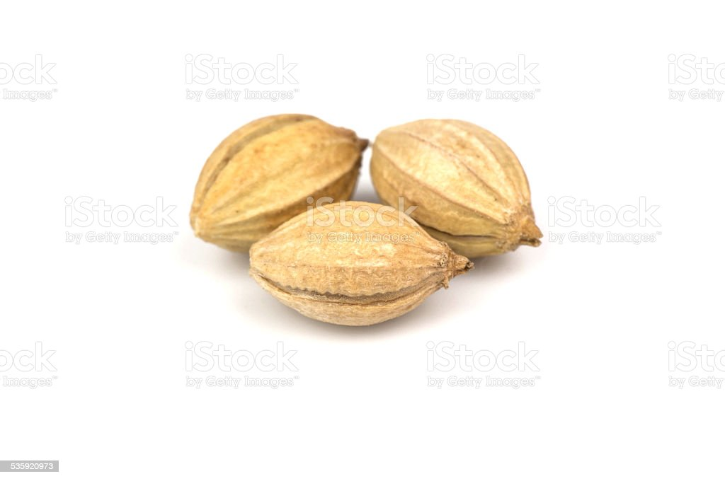 Three seeds of coriander stock photo