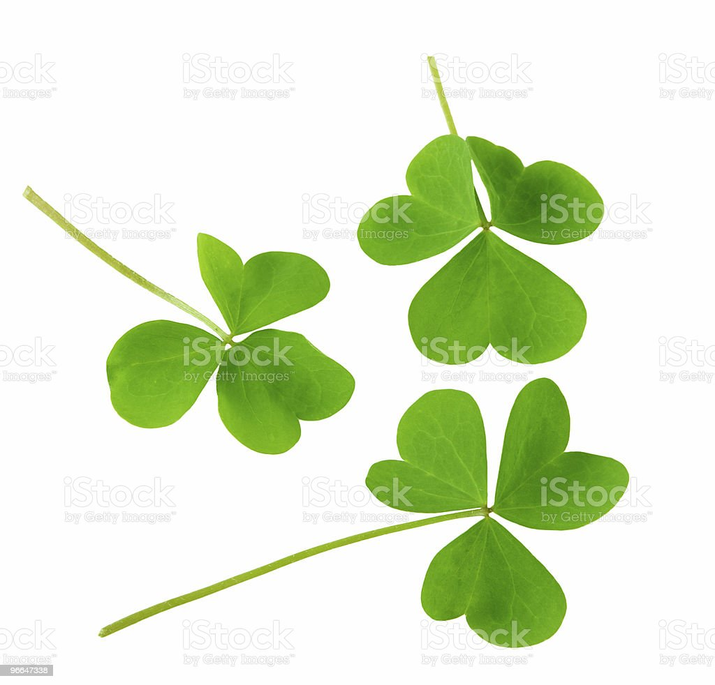 Three Shamrocks stock photo