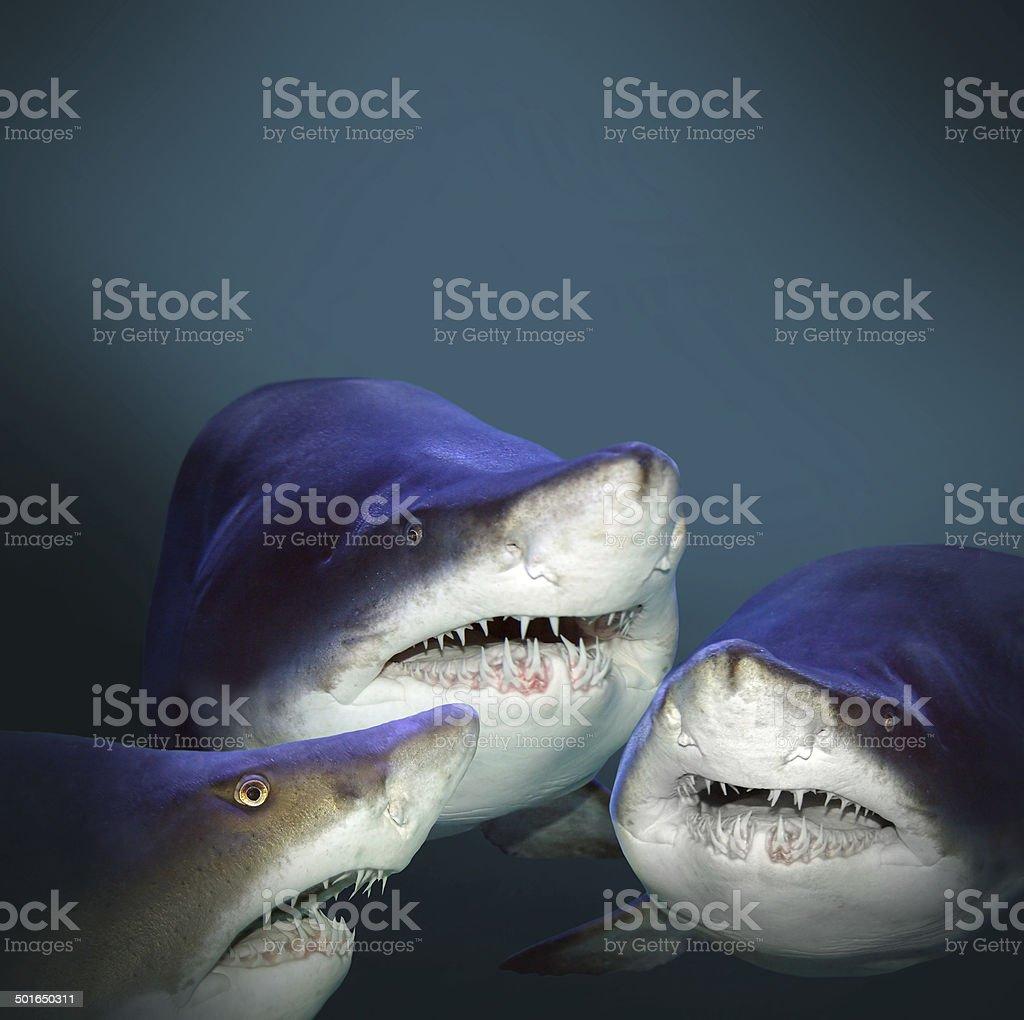Three sharks. stock photo