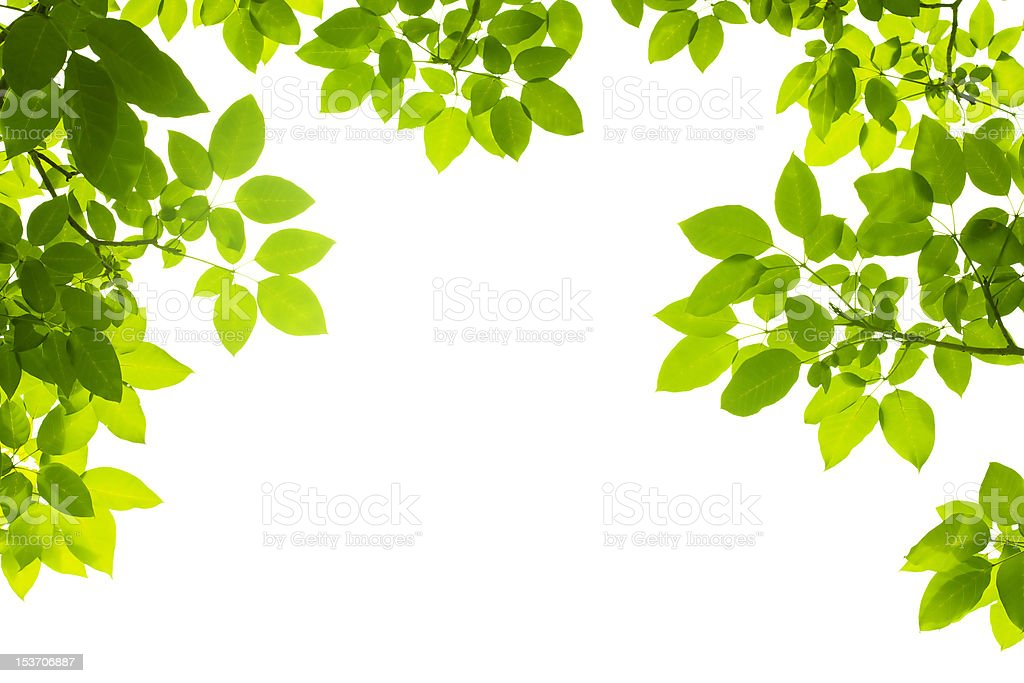 Three sided green leaf border on white background stock photo
