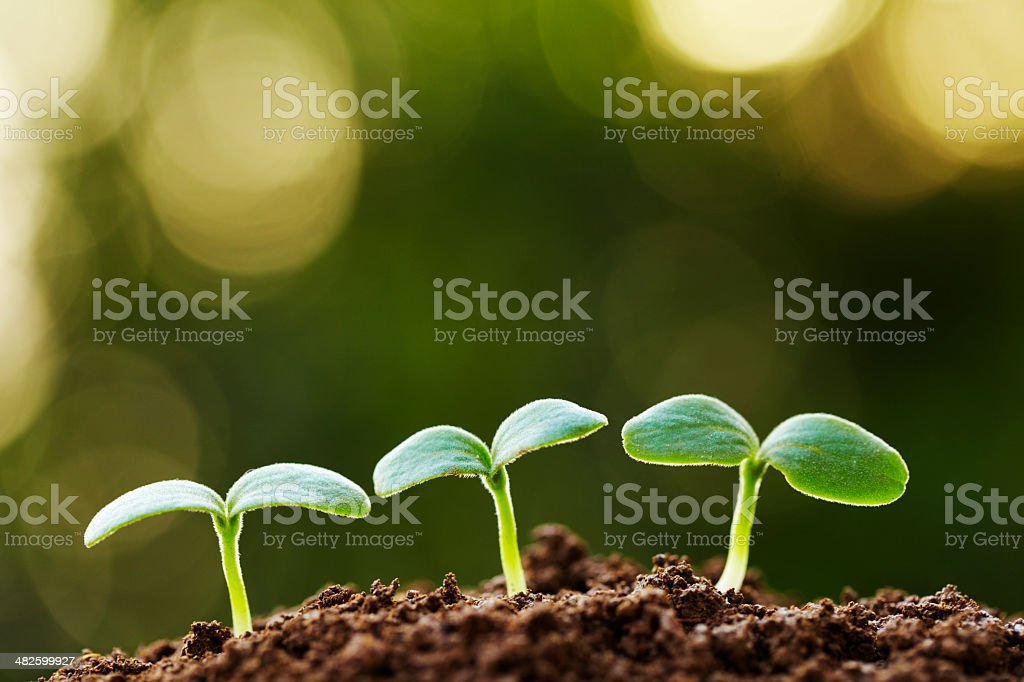 three small bud growing stock photo
