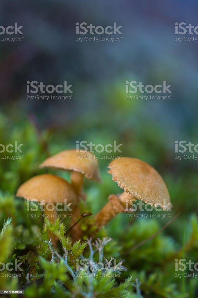 Three small mushrooms stock photo