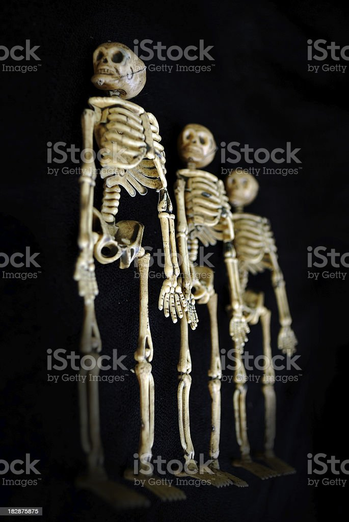 Three Spooky Halloween Skeletons Standing in a Row stock photo