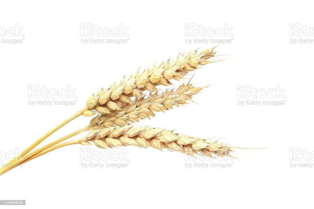 Three stalks of wheat on a white background royalty-free stock photo