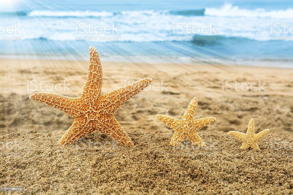 Three starfish overlooking ocean stock photo