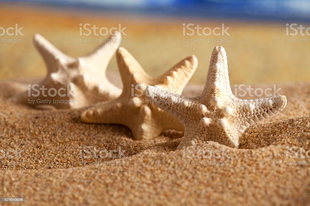 Three starfishes on summer beach stock photo