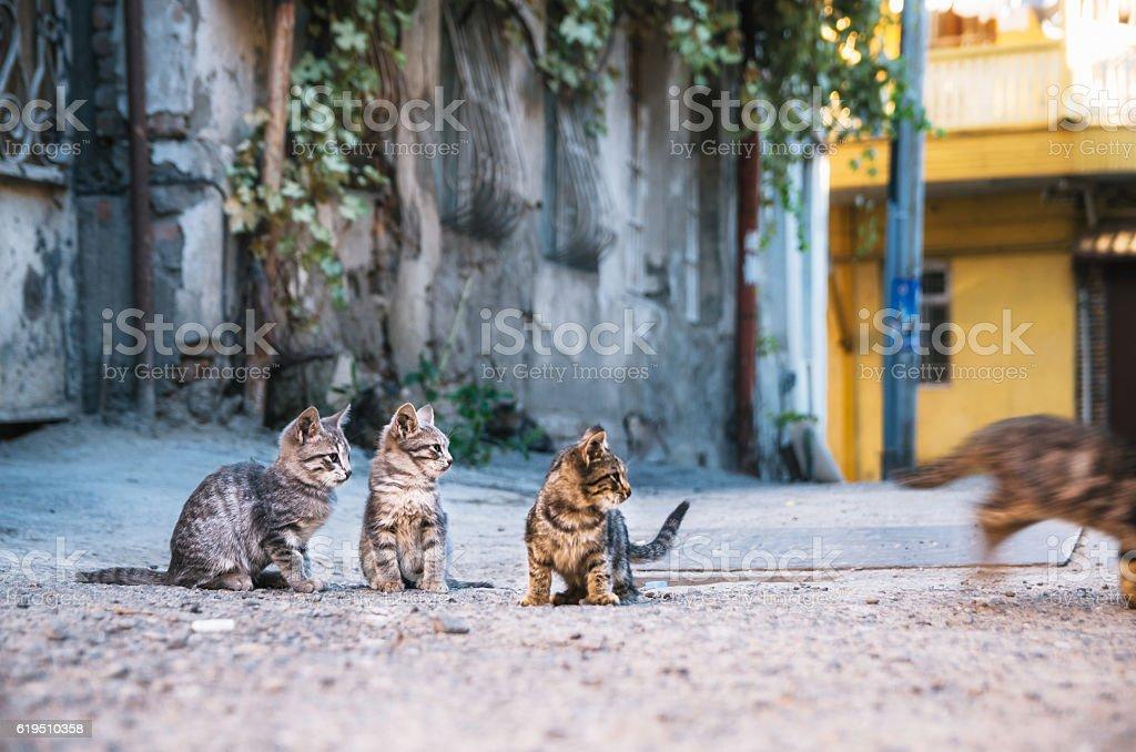 Three street Kittens watching like a kitten runs away. стоковое фото