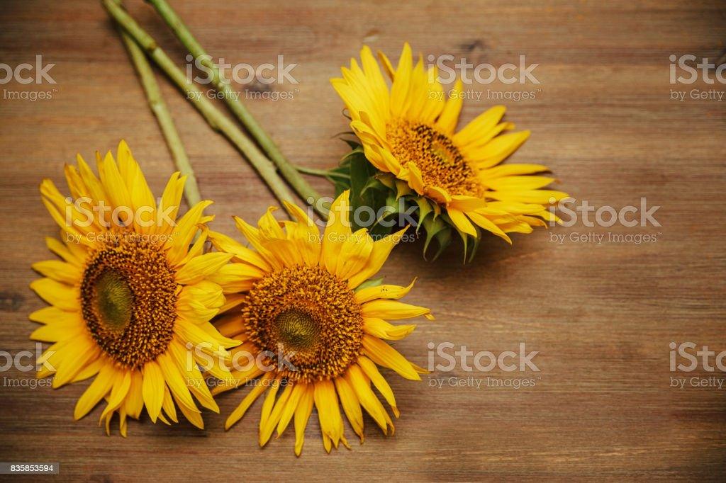 Three sunflowers.Macro.Nature.Wooden background.Selective Focus stock photo