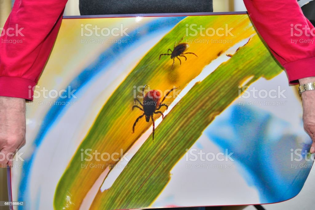 Three ticks stock photo