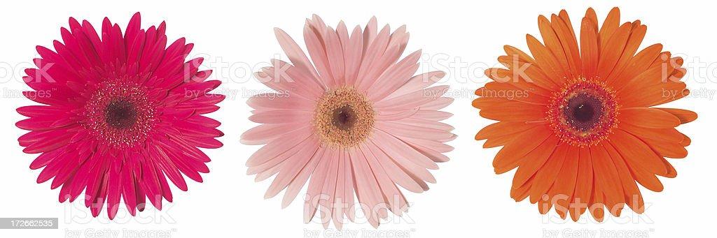 three times flower stock photo