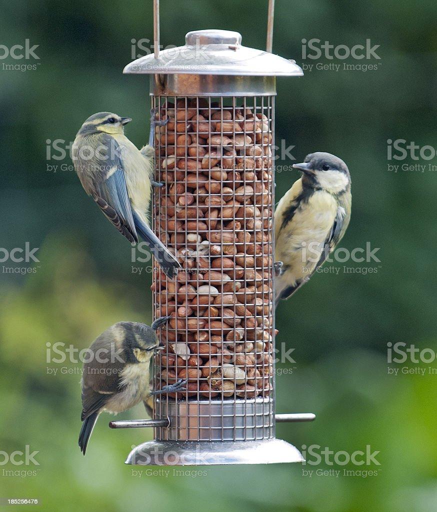 Three Tits at a garden feeder royalty-free stock photo