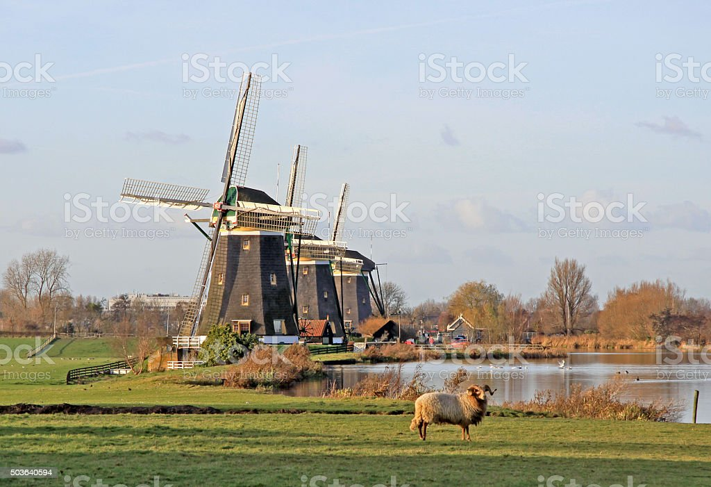 Three traditional windmills on a row in rural landscape stock photo