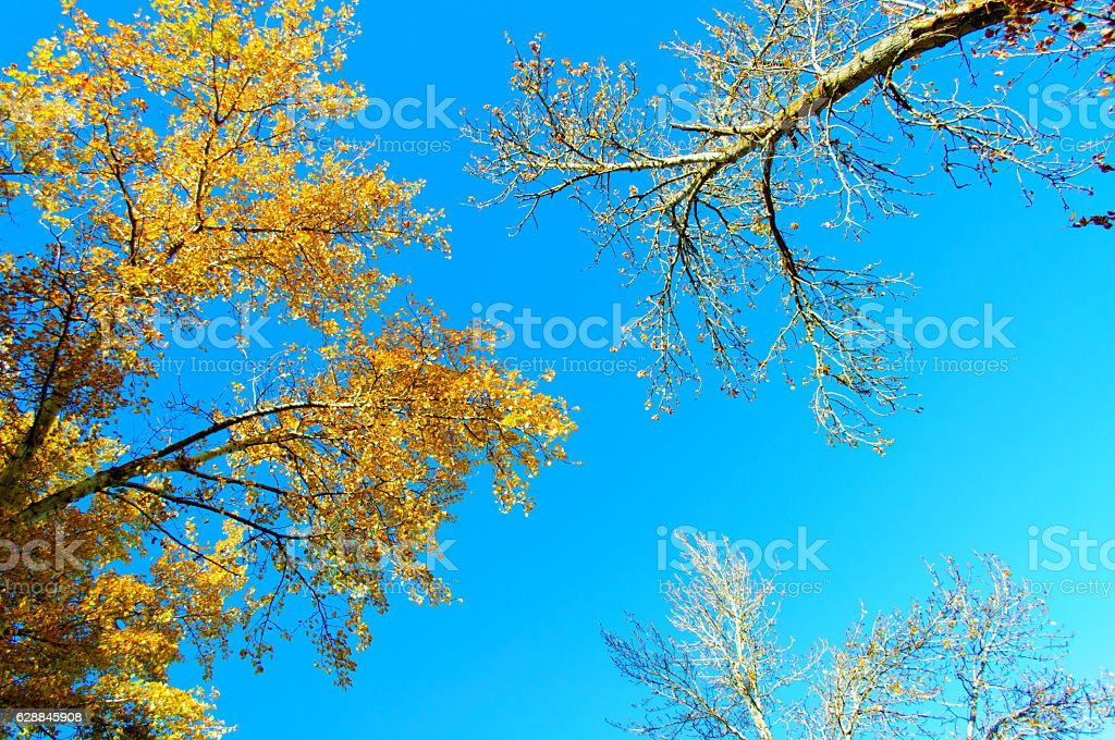 Three Trees Against Blue Sky stock photo