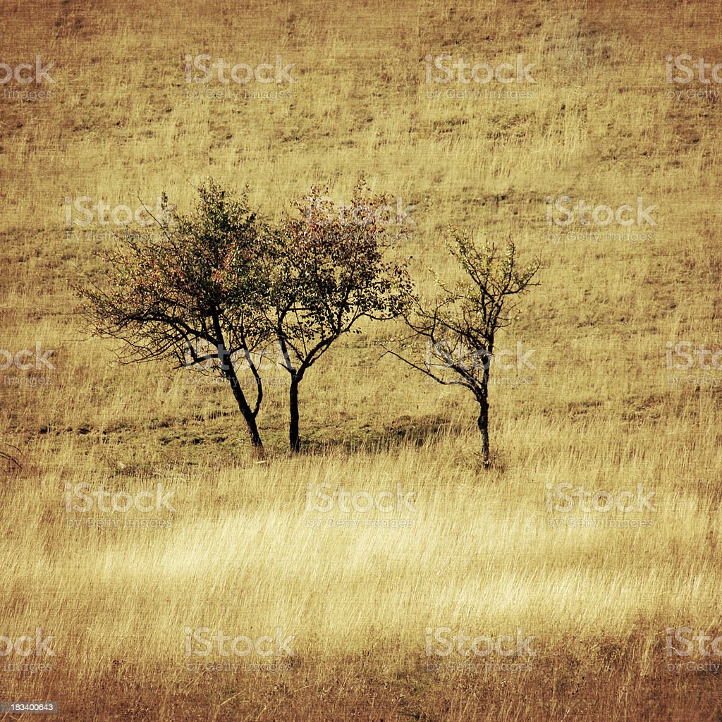 three trees old background royalty-free stock photo