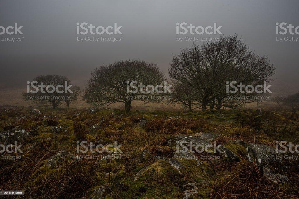 Three trees on the edge of Wistman's wood, dartmoor stock photo