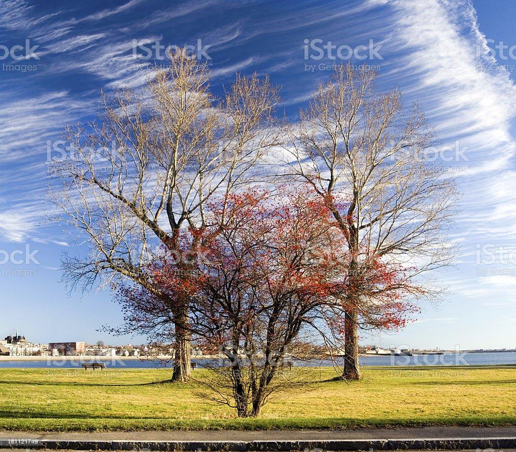 Three trees stock photo