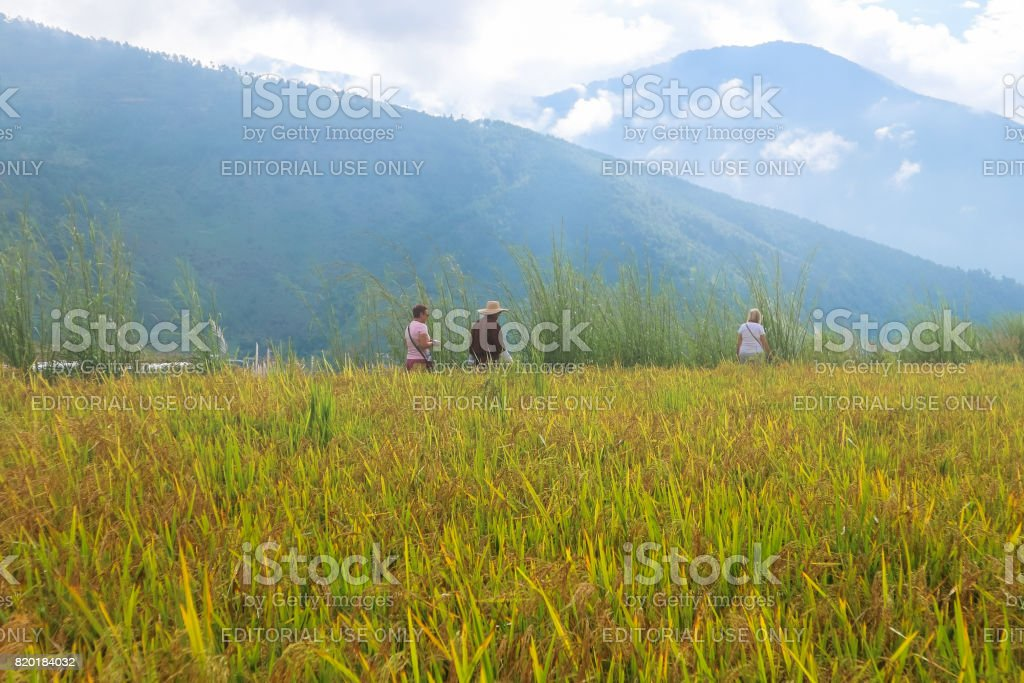 Three unrecognisable people walking in the rice field with foggy mountain view near Thimphu, Bhutan stock photo