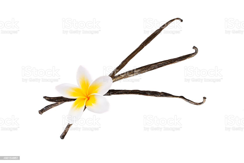 Three vanilla pods with a flower isolated on white background stock photo