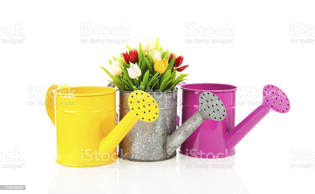 Three watering can with colorful tulips stock photo