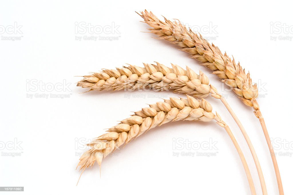 Three wheat stalks on a white background royalty-free stock photo