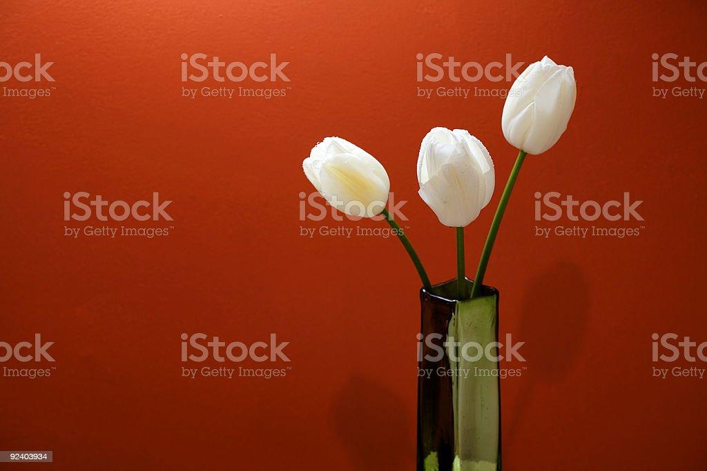 Three White Tulips royalty-free stock photo