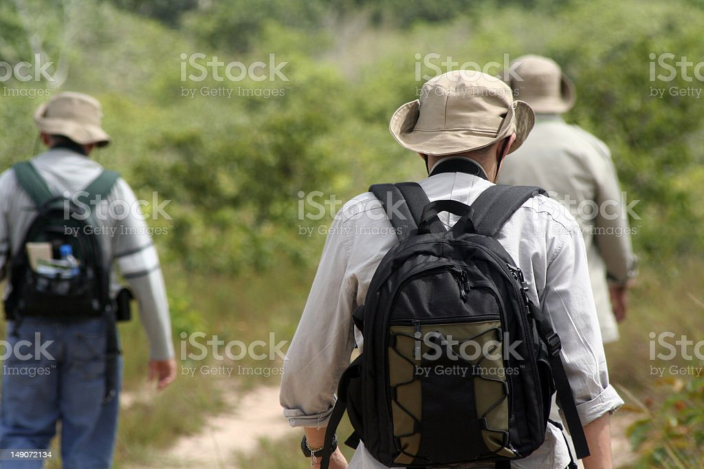 Three wildlife photographers walking in tropical jungle royalty-free stock photo